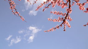 Blooming trees stock video footage