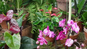 Blooming tropical orchids stock video