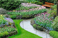Blooming tulips in butchart garden stock image