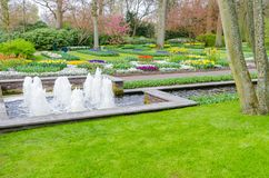 Blooming tulips flowerbeds in Keukenhof flower garden, also known as the Garden of Europe, one of the world largest flower gardens. And popular tourist royalty free stock images