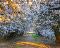 Blooming tunnel Royalty Free Stock Images