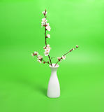 Blooming twig on vase Royalty Free Stock Photos