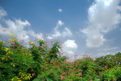 Blooming under the Sun. Various kind of flowers are blooming and raising under the sun Stock Image