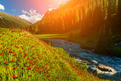 Blooming valley at sunset in the mountains Royalty Free Stock Image