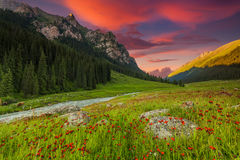 Blooming valley at sunset in the mountains Royalty Free Stock Images