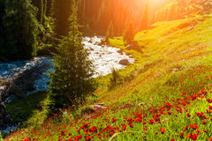 Blooming valley at sunset in the mountains Stock Photography