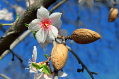 Blooming is vernal. Stock Photos