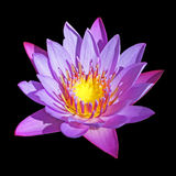 Blooming Water lily, isolated on black background Royalty Free Stock Images