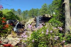 Blooming Waterfall royalty free stock image