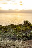 Blooming western wallflower with cactus on cliff side overlooking pacific. Ocean at sunrise royalty free stock images