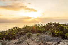 Blooming western wallflower with cactus on cliff side overlooking pacific ocean. At sunrise with clouds royalty free stock image