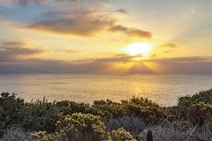 Blooming western wallflower with cactus on cliff side overlooking pacific ocean. At sunrise with clouds stock photos