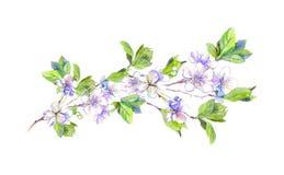 Blooming white cherry tree flowers, japanese sakura, watercolor Royalty Free Stock Photo