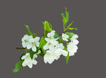 Blooming white flowers. Blooming branch with white flowers.  hand drawn illustration of blossom Stock Images