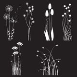Blooming wild flowers separated on a black background Royalty Free Stock Photos