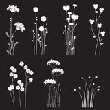 Blooming Wild Flowers Separated On A Black Background Royalty Free Stock Images