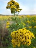 Blooming wildflowers in the autumn day Royalty Free Stock Photography