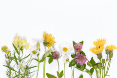 Blooming wildflowers. Chamomile, dandelion, clover, snapdragons on white background royalty free stock photos