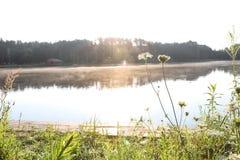 Blooming wildflowers near lake. Royalty Free Stock Photos