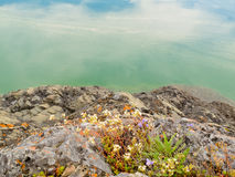 Blooming wildflowers at rocky lakeshore Stock Photo