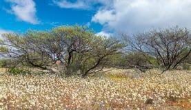 Blooming Wildflowers Stock Image