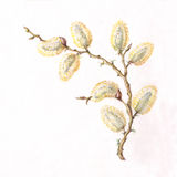 Blooming willow corner pattern. The hand painted blooming willow corner pattern Royalty Free Stock Photography