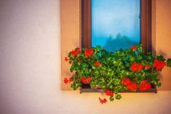 Blooming Window Flowers Stock Photo