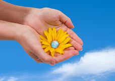 Blooming World. Hands holding a yellow daisy with the Earth as a flower heart Royalty Free Stock Photos