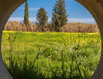 Blooming yellow flowers field of beautiful Moroccan landscape in summer. royalty free stock photo