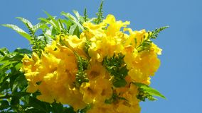 Yellow Flowers on Green Trees on Blue Sky Background