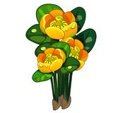 Blooming yellow Nuphar lutea. Vector flower isolated on white. Blooming yellow Nuphar lutea. Vector flower isolated on white background. Illustration in cartoon royalty free illustration