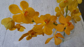 Blooming Yellow orchid on white background Royalty Free Stock Images