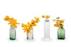 The Blooming yellow Ornithogalum Dubium in a transparent bottle instead vase Stock Photo