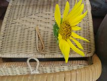 Blooming yellow sunflower on bamboo basket Royalty Free Stock Photo