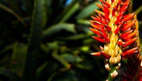 bloomingdale Стоковая Фотография RF