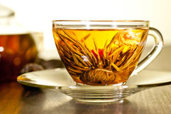 Bloomingflower tea in a glass cup extreme close up Stock Photography
