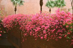 Bloomings. Positive Film Photo Fujichrome Provia 100 Royalty Free Stock Images