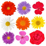 Blooms Royalty Free Stock Image