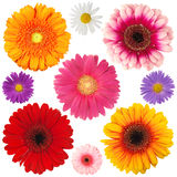 Blooms Royalty Free Stock Photos