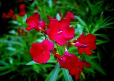 Blooms. Detail of summer red blooms Stock Photo