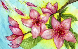 Blooms. Hand painted illustration of flowers Stock Photos