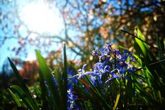 Spring is coming in New Zealand royalty free stock photography
