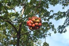 Bloomy butelki gurda w królowej Sirikit parku obraz royalty free