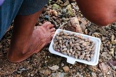 Blootvoetse vissers en kroonslak Stock Foto