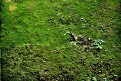 Bloque cubierto musgo Foto de archivo