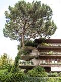 Bloque de apartamentos verde y árbol alto en Roma Imágenes de archivo libres de regalías
