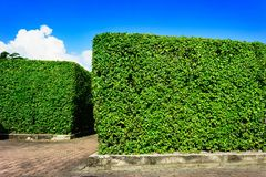 Bloque de camino con las paredes del árbol Fotos de archivo libres de regalías