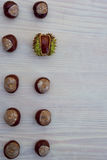 Bloque de 10 castañas europeas Foto de archivo