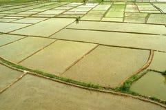 Bloques de campo del arroz Imagen de archivo libre de regalías