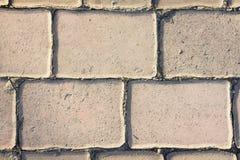 Bloques de cemento, bloques de camino, planta Fotografía de archivo libre de regalías